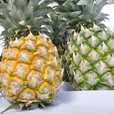 这是一张关于河口菠萝 3 - 4斤 的产品图片
