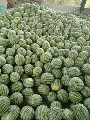 这是一张关于麒麟西瓜 5斤打底 8成熟 1茬 有籽 的产品图片
