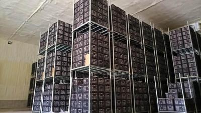 宁夏回族自治区中卫市沙坡头区富硒苹果 75mm以上 条红 纸袋