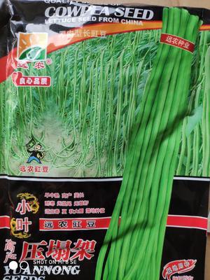 这是一张关于压塌架豆角种子 ≥90% 的产品图片
