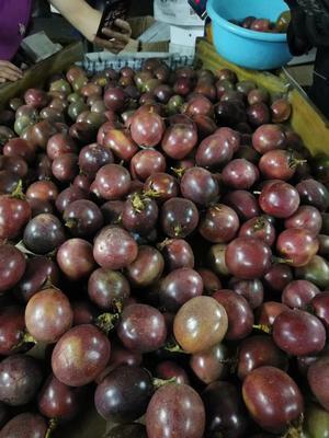这是一张关于越南百香果 70 - 80克 的产品图片