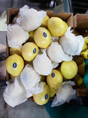 广东省广州市白云区黄柠檬 5 - 6两