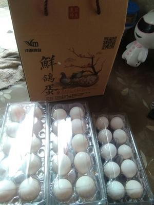 贵州省毕节市七星关区白鸽蛋 食用 礼盒装