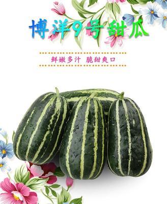 这是一张关于博洋9号甜瓜 1斤以上 网店微商直供产地直发的产品图片