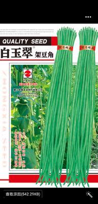 山东省济南市历城区白皮豆角种子 ≥99%