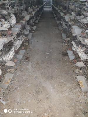 广东省广州市花都区玉米下脚料 毛货 水份14%-16%