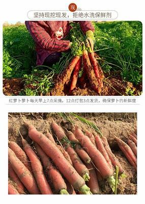 广东省潮州市湘桥区大红萝卜 0.2~1斤