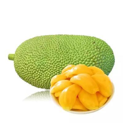海南省海口市秀英区海南菠萝蜜 10-15斤