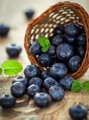 山东省临沂市蒙阴县智利蓝莓 8 - 10mm以上 鲜果