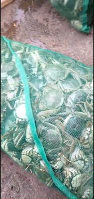 江苏省南京市高淳区高淳大闸蟹 母蟹 2.0两以下
