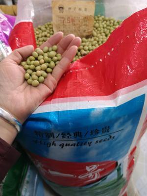 四川省成都市金牛区台湾75-3毛豆 30克以上