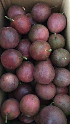 广西壮族自治区崇左市凭祥市紫色百香果 50 - 60克