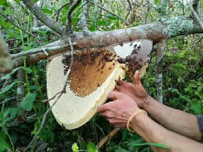 云南省德宏傣族景颇族自治州瑞丽市土蜂蜜 塑料瓶装 2年以上 98%