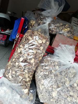 广东省河源市连平县原木干香菇 袋装 1年
