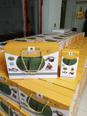 这是一张关于稻花香二号大米 一等品 早稻 粳米 的产品图片