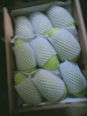 这是一张关于金煌芒  6两以上 海南特产金皇芒果质量的产品图片