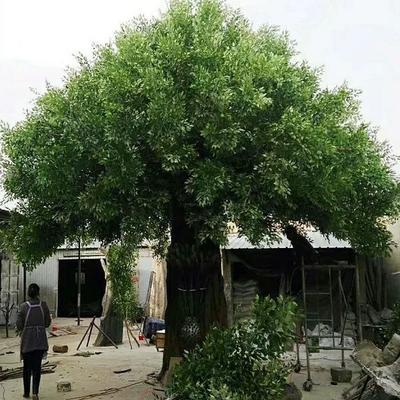 江苏省宿迁市沭阳县晚樱 0.5米以下 4公分以下