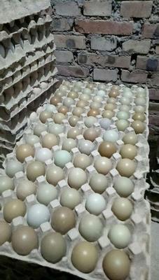 这是一张关于野鸡蛋 食用 箱装 的产品图片