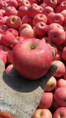 山东省临沂市沂水县红富士苹果 75mm以上 全红 纸袋