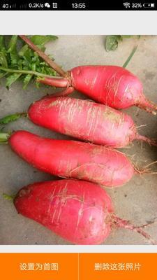 这是一张关于红皮萝卜 1~1.5斤 的产品图片