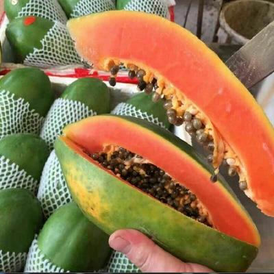广东省汕头市潮南区红心木瓜 1.5 - 2斤