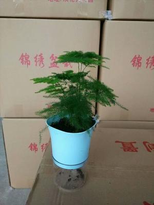 云南省昆明市呈贡区文竹