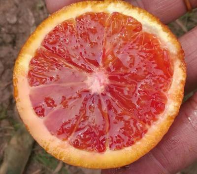 这是一张关于血橙 55 - 60mm 4-8两 的产品图片