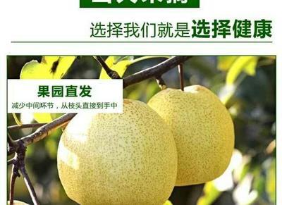 这是一张关于砀山酥梨 80mm以上 250-300g 的产品图片