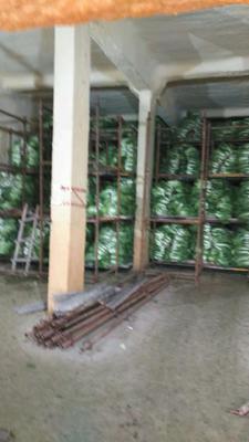 陕西省西安市雁塔区青杂三号白菜 6~10斤 净菜