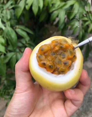 福建省漳州市南靖县黄金百香果 40 - 50克