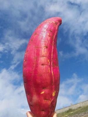 这是一张关于西瓜红 6两~1斤 红皮 的产品图片