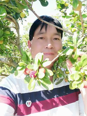 云南省红河哈尼族彝族自治州石屏县特早梅 2 - 2.5cm