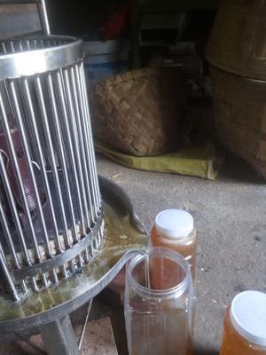 四川省广安市武胜县土蜂蜜 塑料瓶装 2年以上 100%