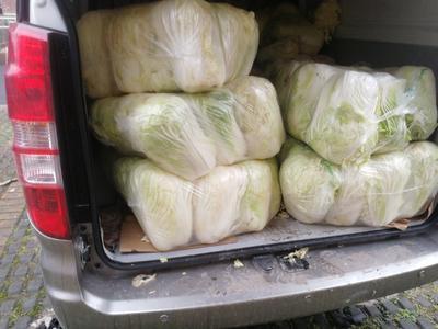 上海松江区高白大白菜 3~6斤 净菜