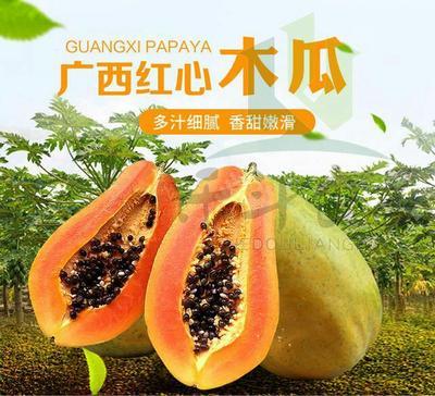 河北省唐山市迁安市红心木瓜 0.5 - 1斤