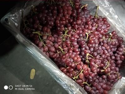 河北省石家庄市晋州市克伦生葡萄 1-1.5斤 5%以下 1次果