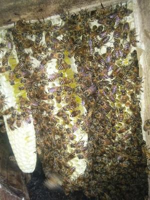 贵州省铜仁市碧江区野生蜂蜜 玻璃瓶装 2年 100%
