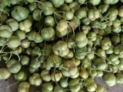 这是一张关于滇黄精 块 的产品图片