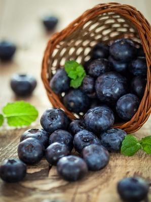 山东省临沂市蒙阴县智利蓝莓 10 - 12mm以上 鲜果