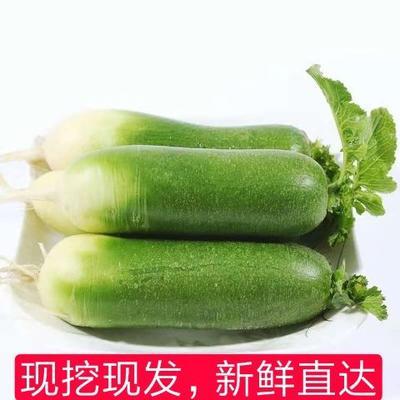广东省潮州市湘桥区水果萝卜 0.2~1斤