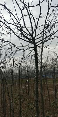 山东省济宁市鱼台县皂角树