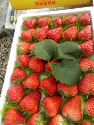 这是一张关于丹东草莓 20克以下 的产品图片