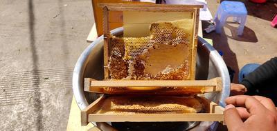 云南省昆明市五华区土蜂蜜 散装 2年 100%