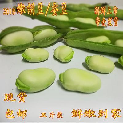 云南省昆明市官渡区新鲜蚕豆