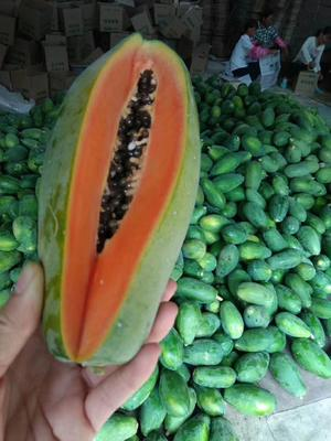 海南省海南省万宁市红心木瓜  1 - 1.5斤 自产自销,