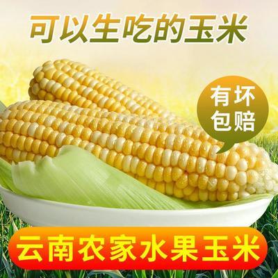 这是一张关于水果玉米  带壳 甜糯 新鲜现吃的产品图片