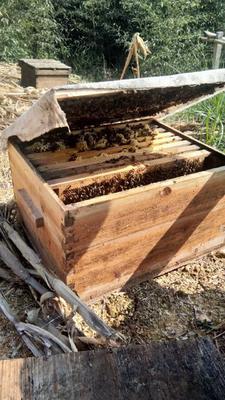 云南省红河哈尼族彝族自治州个旧市土蜂蜜 玻璃瓶装 2年以上 98%
