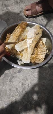 广西壮族自治区百色市隆林各族自治县土蜂蜜 塑料瓶装 2年以上 100%