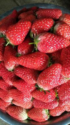 山东省济南市槐荫区甜宝草莓 20克以下 20克左右