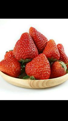 陕西省渭南市大荔县奶油草莓 20克以上
